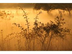 obrázek Slunce-0003-P
