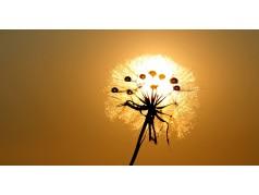 obrázek Východ slunce-0011-P