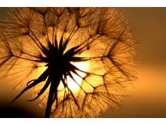 obrázek Východ slunce-0012-P