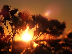 obrázek Východ slunce-0018-P