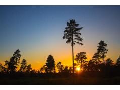 obrázek Východ slunce-0021-P