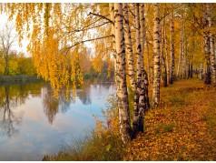 obrázek Březový les-0022-P