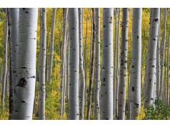 obrázek Březový les-0029-P