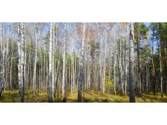 obrázek Březový les-0030-P