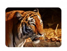 obrázek Prostírání-355 - Tygr