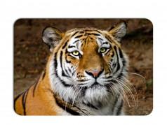 obrázek Prostírání-356 - Tygr