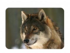 obrázek Prostírání-365 - Vlk