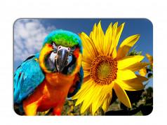 obrázek Prostírání-375 - Papoušek