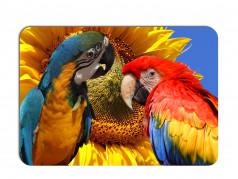 obrázek Prostírání-377 - Papoušek