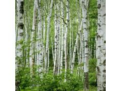 obrázek Břízový les-09