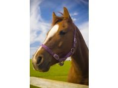 obrázek Hlava koně-018