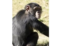 obrázek Opice-025