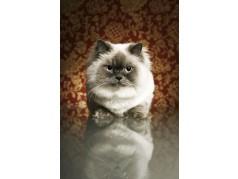 obrázek Kočka-033