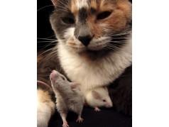 obrázek Kočka-044