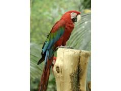 obrázek Papoušek-072