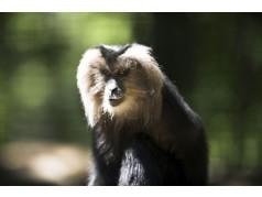 obrázek Opice-097