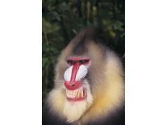 obrázek Opice-0203
