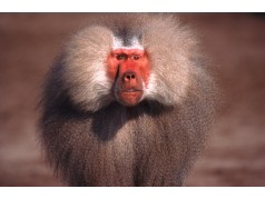 obrázek Opice-0219